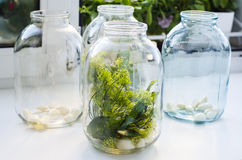 Sterilized jars with herbs and garlic for pickling cucumbers Stock Image