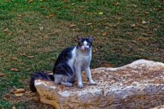 Sterke kat op een rots Stock Foto's
