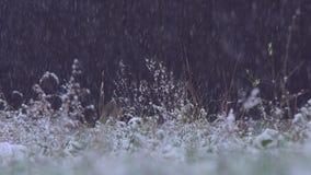 Sterke sneeuw op het gras en de bomen stock video
