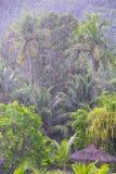 Sterke tropische regen in de Seychellen stock afbeeldingen