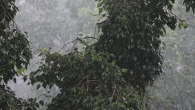 Sterke winden en regen stock video