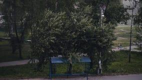 Sterke windslagen De orkaan begint De takken van de boom zijn sterk geneigd stock videobeelden