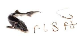 Sterlet e palavra frescos F MIM S H composto dos ganchos de peixes oxidados velhos Fotografia de Stock