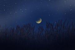 Sterlichten in de donkere afnemende maan over het gras Stock Afbeelding