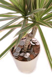 Sterling Money in plant pot. Studio cutout Stock Photo