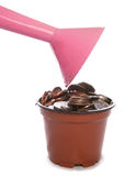 Sterling Money in plant pot being watered. Studio cutout Stock Images