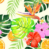 Sterlitzia tropical pattern Royalty Free Stock Photos