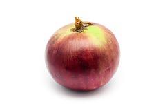 Stern Apple, Chrysophyllum Cainito, (goldener Laubbaum), thailändische Nordfrucht, lokalisiert Lizenzfreie Stockbilder