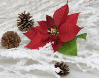 Stern des Weihnachten Stockfotografie