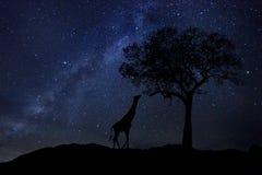 Stern schleppt Milch-Weise in Südafrika-nächtlichem Himmel Lizenzfreie Stockbilder
