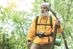 Stern senior male tourist walking in forest. Portrait of serious old man in yellow windbreaker hiking in wild woodland. He is carrying backpack and looking Royalty Free Stock Images