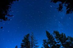 Stern-Spuren mit Bäumen Lizenzfreie Stockfotos