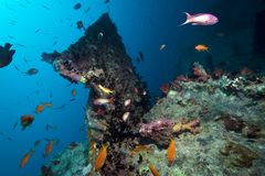 Stern of the Thistlegorm wreck. Royalty Free Stock Image