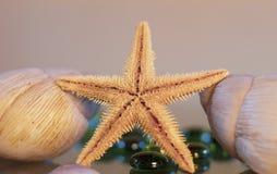 Stern und Marineaustern, verschiedene Farben und Formen, die das Meer und den Sommer darstellen lizenzfreies stockbild