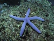 Stern unter dem Meer Stockfoto