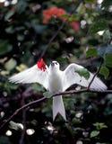 Sterna bianca con il fiore fotografia stock libera da diritti