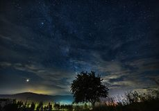 Sterne über dem Baum stockfotografie