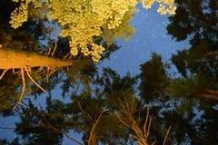 Sterne, die durch die Bäume brechen stockbild
