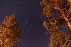 Sterne und Bäume lizenzfreies stockbild