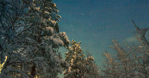 Sternenklarer Himmel über dem Wald Stockbild