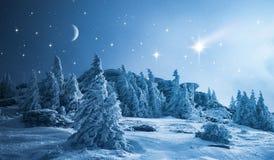 Sternenklarer Himmel über Winterwald stockfoto