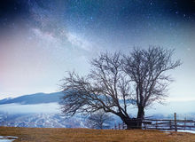 Sternenklarer Himmel in der schneebedeckten Nacht des Winters Fantastische Milchstraße Stockfotos