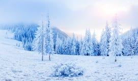Sternenklarer Himmel in der schneebedeckten Nacht des Winters fantastische Milchstraße im neuen Lizenzfreie Stockbilder