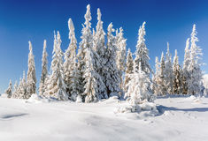 Sternenklarer Himmel in der schneebedeckten Nacht des Winters fantastische Milchstraße im neuen Lizenzfreie Stockfotos