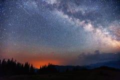 Sternenklarer Himmel durch die Bäume stockbild