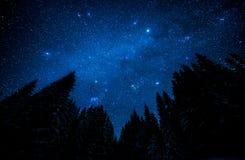 Sternenklarer Himmel im Nachtwald Lizenzfreies Stockbild