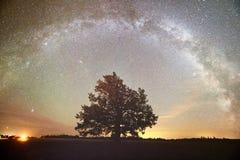 Sternenklarer nächtlicher Himmel in einem Wald Lizenzfreie Stockbilder