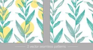 Sternes avec les feuilles tropicales vertes avec les cercles jaunes d'isolement sur le fond blanc illustration de vecteur
