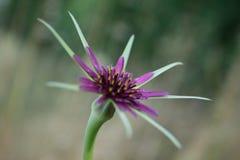 Sternförmige Blume Lizenzfreies Stockfoto