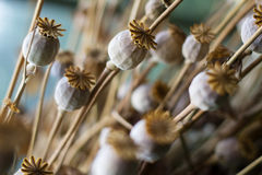 Sternförmige Blume Stockfotos