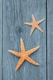 Sternfische Lizenzfreie Stockbilder