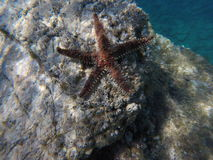 Sternfische auf dem Strand Lizenzfreies Stockfoto