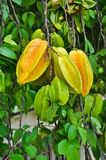 Sternfrucht Stockfotografie