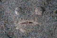 Sterngucker im Sand Stockfoto
