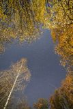 Sternschnuppe über Herbstbäumen stockfotografie