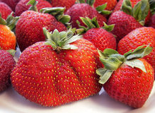 Steroid Strawberry Royalty Free Stock Photos