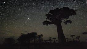 Sterrige hemel en baobabbomen stock videobeelden