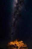 Sterrige hemel en Melkwegboog, met details van zijn heldere kleurrijke die kern, van groene oase in de Namib-woestijn worden geva stock afbeelding