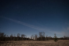 Sterrige hemel over bos Royalty-vrije Stock Afbeeldingen
