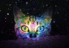 Sterrige Multikleuren Nieuwsgierige Kat royalty-vrije illustratie