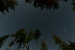 Sterrige Nacht in het Bos Stock Afbeeldingen