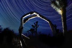 Sterslepen in Joshua Tree National Park Royalty-vrije Stock Afbeeldingen