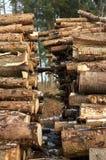 stertą drzewa zdjęcie stock