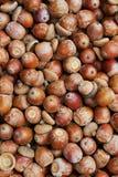 Sterta acorns Obrazy Royalty Free