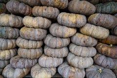 Sterta dojrza?a Tajlandzka bania przy rolnika rynkiem obrazy stock
