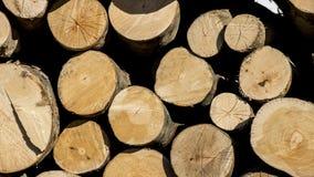 Sterta drewno Stos bagażnik Obraz Stock